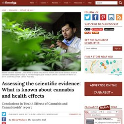 Assessing scientific evidence: What is known about cannabis health effects
