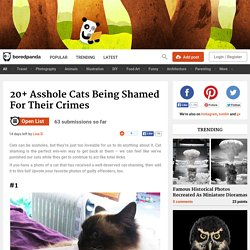 20+ Asshole Cats Being Shamed For Their Crimes
