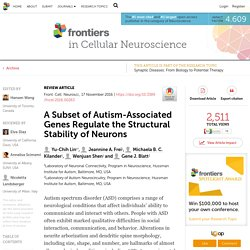 A Subset of Autism-Associated Genes Regulate the Structural Stability of Neurons