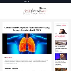 Common Plant Compound Found to Reverse Lung Damage Associated with COPD – REALfarmacy.com