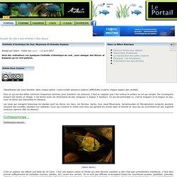 [Portail de l'association AquAgora] - Cichlidés d'Amérique du Sud, moyennes et grandes espèces