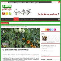 Une bonne association de plantes au potager