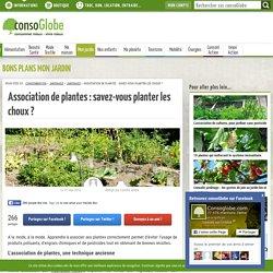 Association de plantes : savez-vous planter les choux ?