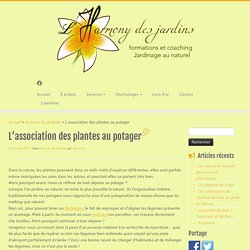 L'association des plantes au potager