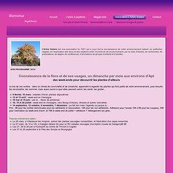 Association l'arbre solaire - magaliamir.fr