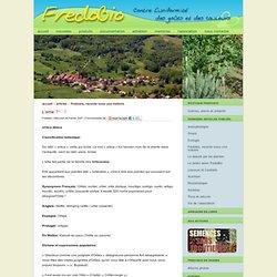 L'ortie - Association FredoBio - Contre l'uniformité des goûts et des couleurs