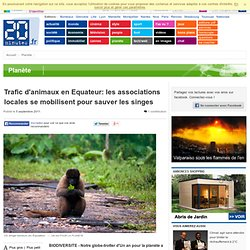 Trafic d'animaux en Equateur: les associations locales se mobilisent pour sauver les singes