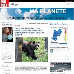 Ours des Pyrénées : les associations de défense du plantigrade veulent saisir la justice