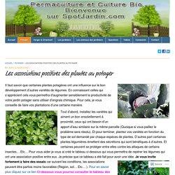 Les associations positives des plantes au potager