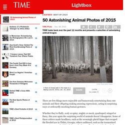 50 Astonishing Animal Photos of 2015