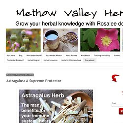 Methow Valley Herbs: Astragalus: A Supreme Protector