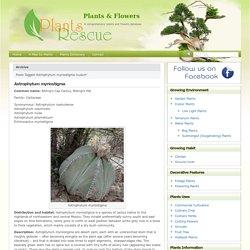 Plants & Flowers » Astrophytum myriostigma nudum