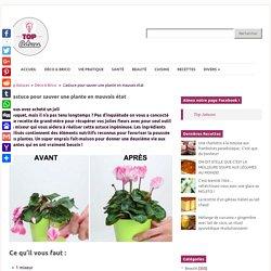 L'astuce pour sauver une plante en mauvais état - Top Astuces