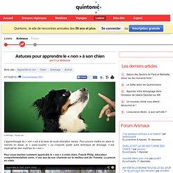 Astuces pour apprendre le « non » à son chien, Loisirs