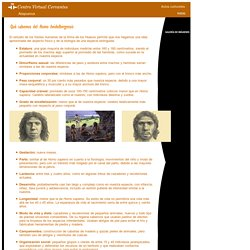 Atapuerca. «Homo heidelbergensis»: el relevo.