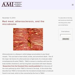 Red meat, atherosclerosis, and the microbiome — The American Microbiome Institute