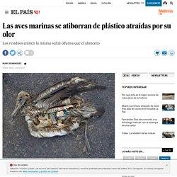 Las aves marinas se atiborran de plástico atraídas por su olor