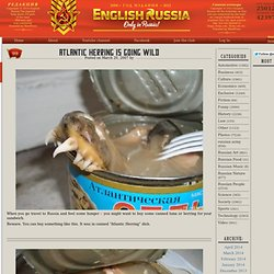 English Russia » Atlantic Herring Is Going Wild