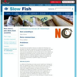 SLOW FISH - Cabillaud (ou morue) de l'Atlantique.