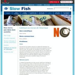SLOW FISH - Cabillaud (ou morue) de l'Atlantique.