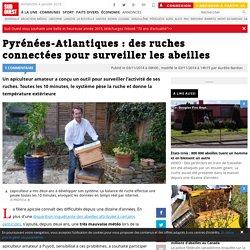 Pyrénées-Atlantiques : des ruches connectées pour surveiller les abeilles
