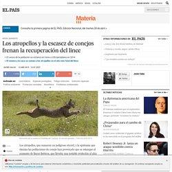 Los atropellos y la escasez de conejos frenan la recuperación del lince