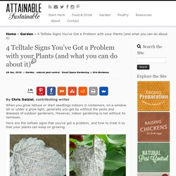 4 Telltale Signs You've Got a Problem with your Plants (and what you can do about it) - Attainable Sustainable