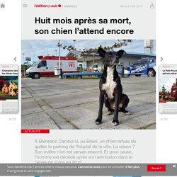 Huit mois après sa mort, son chien l'attend encore - Edition du soir Ouest France - 02/08/2016