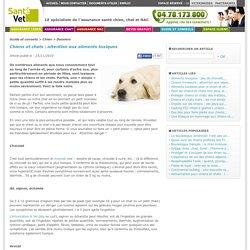 Chiens et chats : attention aux aliments toxiques chien - SantéVet