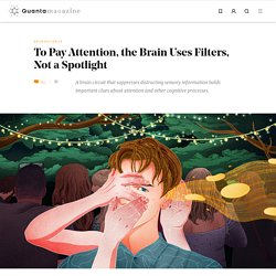 To Pay Attention, the Brain Uses Filters, Not a Spotlight