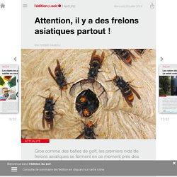 Attention, il y a des frelons asiatiques partout! - Edition du soir Ouest France - 20/07/2016