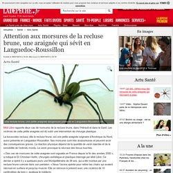 LA DEPECHE 09/07/15 Attention aux morsures de la recluse brune, une araignée qui sévit en Languedoc-Roussillon
