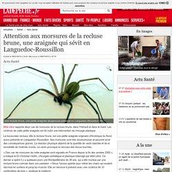 Attention aux morsures de la recluse brune, une araignée qui sévit en Languedoc-Roussillon - 09/07/2015 - ladepeche.fr