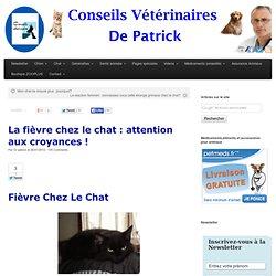 La fièvre chez le chat : attention aux croyances ! - Conseils d'un vétérinaire