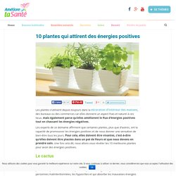 10 plantes qui attirent des énergies positives