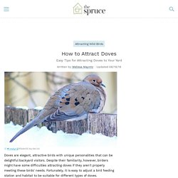 How to Attract Doves - Backyard Birds
