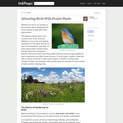 Attracting Birds With Prairie Plants