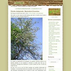 Poirette, Aubépinette : Macérations Creusoises - Ciao 93