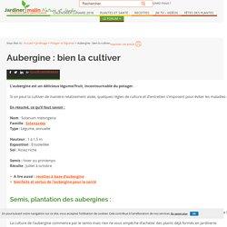 Aubergine : semis, culture et récolte des aubergines