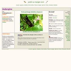 Aubergines : cultiver des aubergines bio, conseils et fiche jardinage