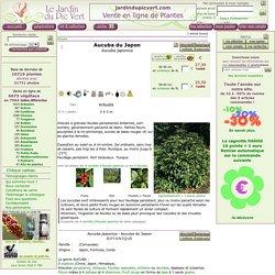 Aucuba du Japon, Aucuba japonica