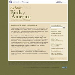 Audubon's Birds of America at the University of Pittsburgh
