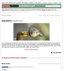 Augenblick: Spießfischer - SPIEGEL ONLINE - Nachrichten - Wissenschaft