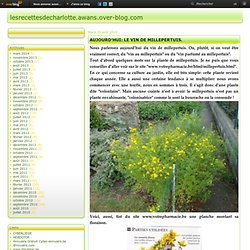 AUJOURD'HUI: LE VIN DE MILLEPERTUIS. - Le blog de lesrecettesdecharlotte.awans.over-blog.com
