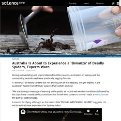 Australia Is About to Experience a 'Bonanza' of Deadly Spiders, Experts Warn