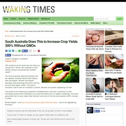 South Australia Does This to Increase Crop Yields 300% Without GMOs