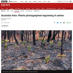 Australia fires: Plants photographed regrowing in ashes