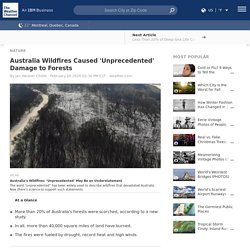 Australia Wildfires Caused 'Unprecedented' Damage to Forests