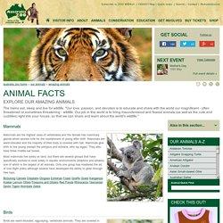 Australia Zoo's Animal Facts