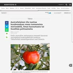 Australialainen tila tuottaa kuudenneksen maan tomaateista merivedellä, ilman kasvumaata tai fossiilisia polttoaineita